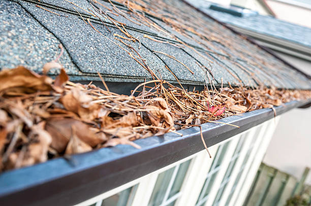 Clogged gutter and the pests they attract - Newton Window Cleaning