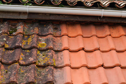 roof & gutter clean - Newton Window Cleaners